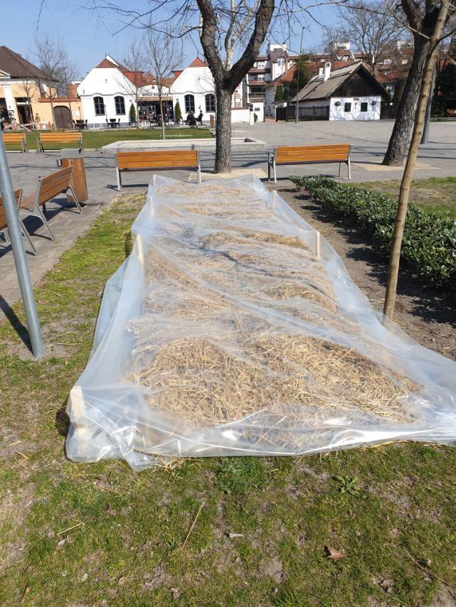 Védik a fagytól a kiskőrösi városközpont virágoskertjeit